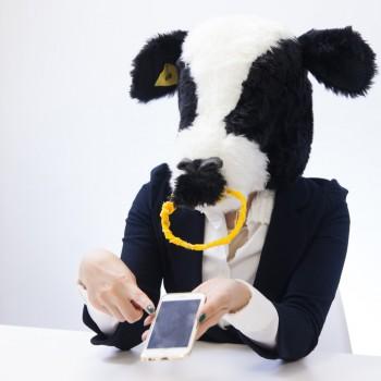 スマホ画面を見せる牛