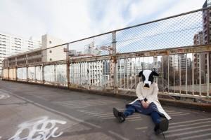 路頭に迷う牛