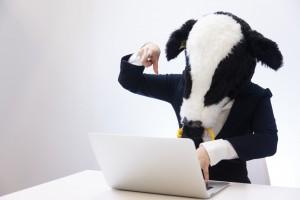 パソコンを扱う牛