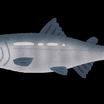 鮭のイラスト